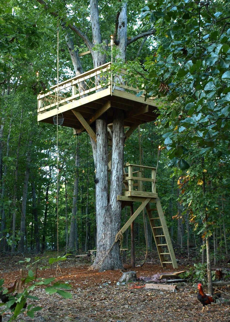 Simple Tree Fort Ideas